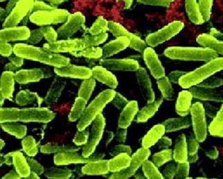 пробиотики. что это такое?